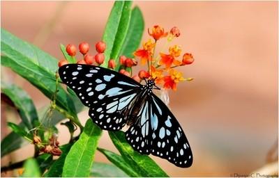 Beautiful Butterfly & flowers
