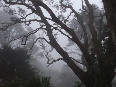 mist meeting