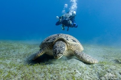 Underwater Photography II