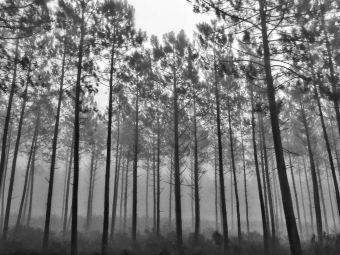 In the shades by angelassantos - Silhouettes Of Trees Photo Contest