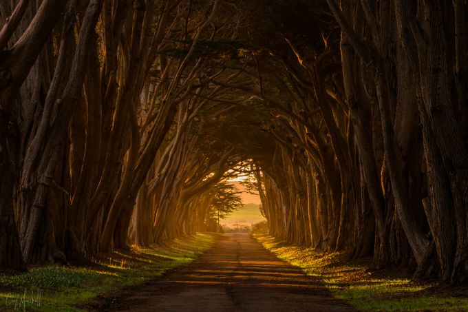 Tunnel of Light  by corymarshall - A Road Trip Photo Contest