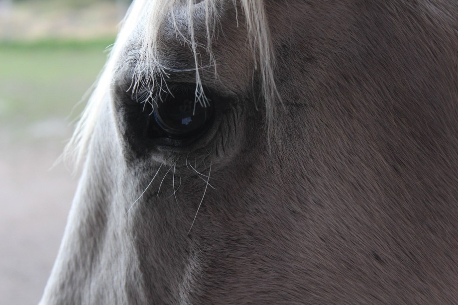 Camera Used: Cannon Rebel T4i  This fall we put down my beloved pony Buddy at the wise old age of...