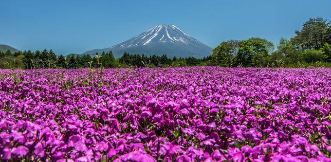 Mt Fuji by zakzarins - The Magic Of Japan Photo Contest