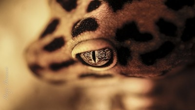 Predator's Eye