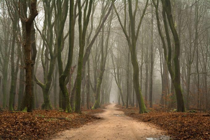 Forest Walk by ronaldjansen - Divine Forests Photo Contest