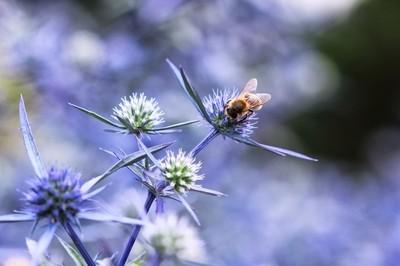 Bokeh bee