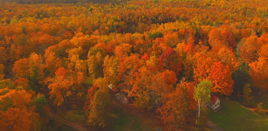 Turning of the trees this fall in Hayward Wisconsin