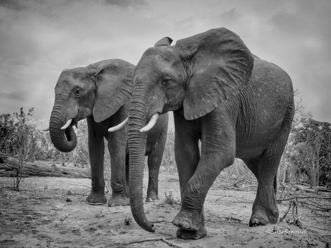 A Taste of Africa by SusiStroud - A Black And White World Photo Contest