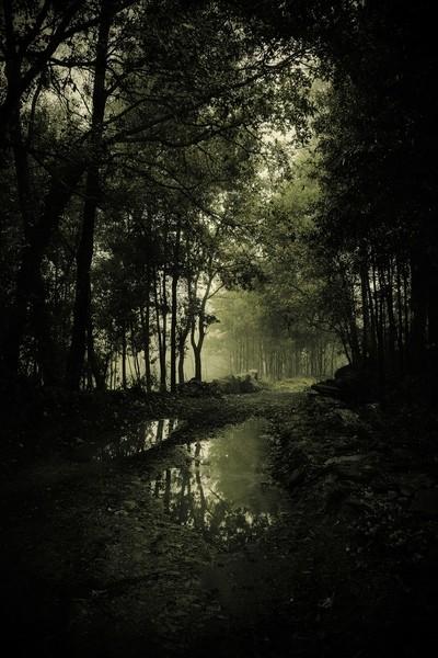 Green dark woods