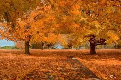 Fading Autumn; Mt. Jackson, VA