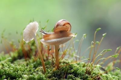 I love mushrooms by Theo-Herbots-Fotograaf