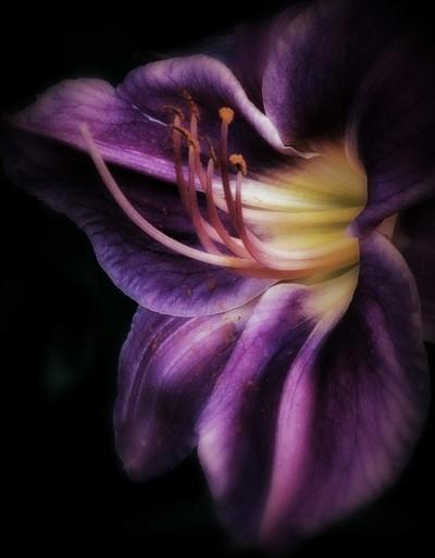 Petals & Pollen II, 7.16.2014