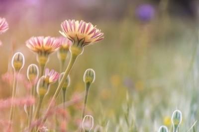flores en fantasia