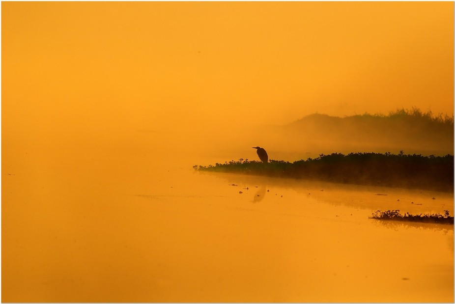 An egret sits huddled by the river on a cold misty morning.