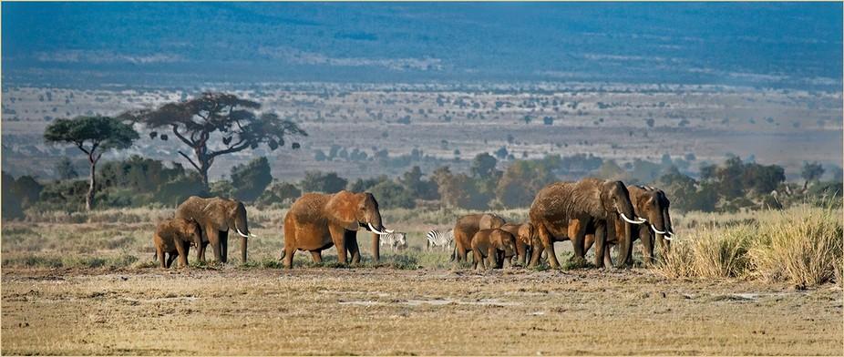 _MG_2782 Elephants on Parade 100 ppi