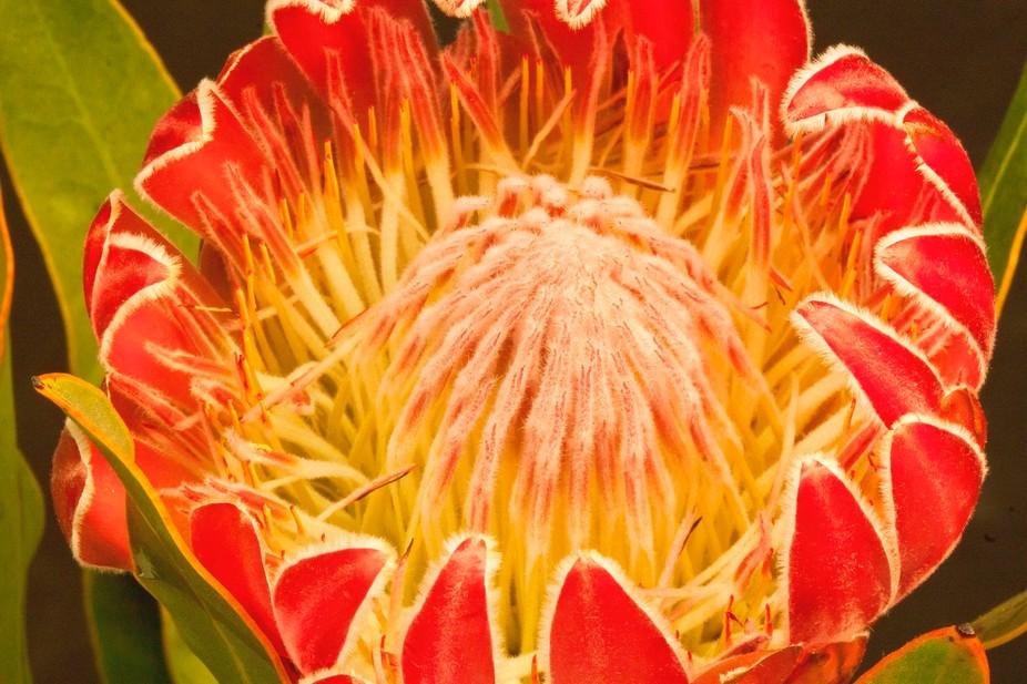 an edgy desert flower