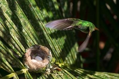 returning to nest