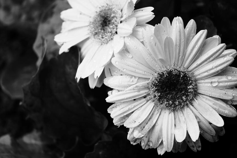 Flowers in BW