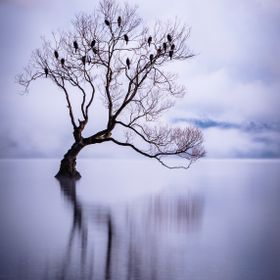 Beautiful misty morning at Lake Wanaka in New Zealand