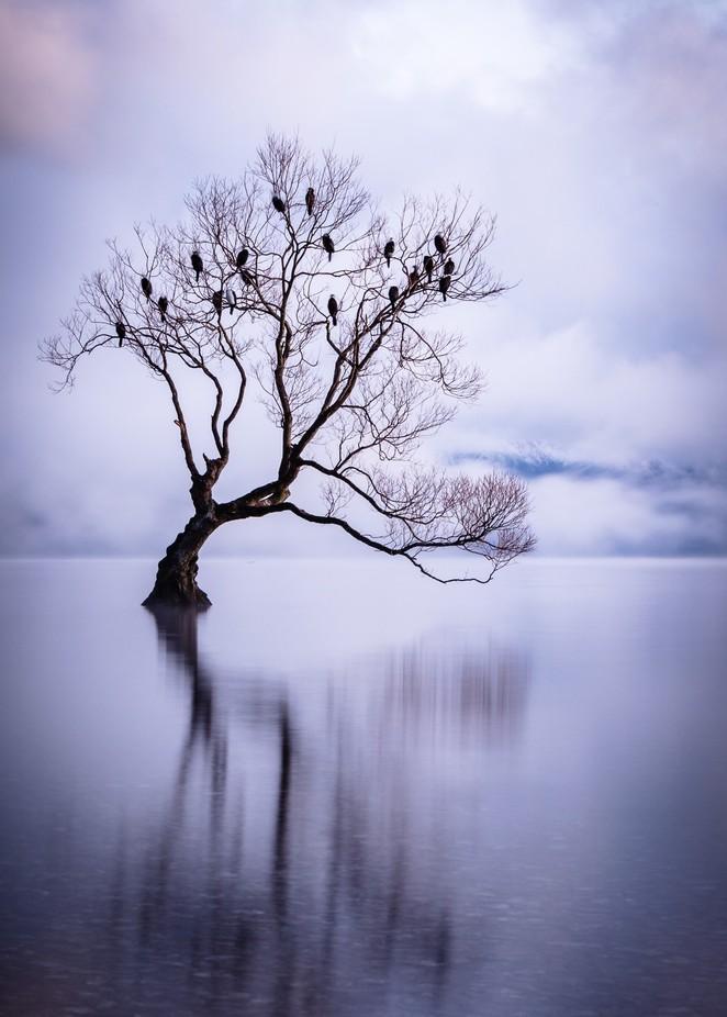 Lake Wanaka Misty Sunrise by michellemckoy - The Zen Moment Photo Contest
