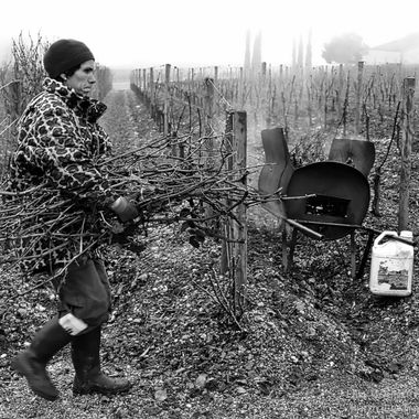 Traditional methods utilized in this mature vineyard on the Bordeaux Right Bank, with a small furnace on wheels between the rows for burning canes after pruning