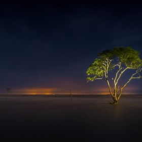 Lonely Tree at Go Cong, Viet Nam