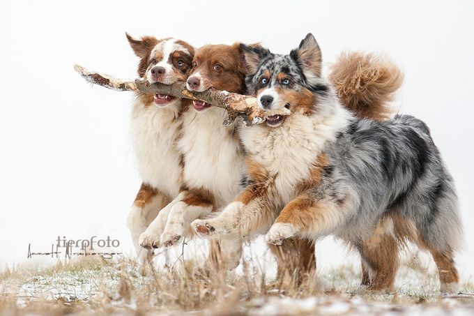 Friends forever! by tierpfoto - Only Pets Photo Contest
