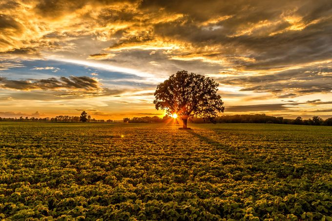 Soy Sunset by gailhowarth - Monthly Pro Vol 24 Photo Contest