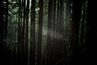 Deep In the forrest