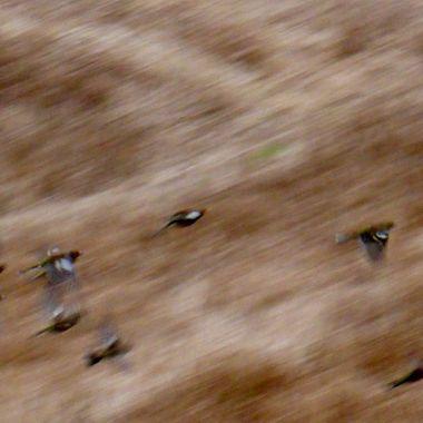 High speed Birdies
