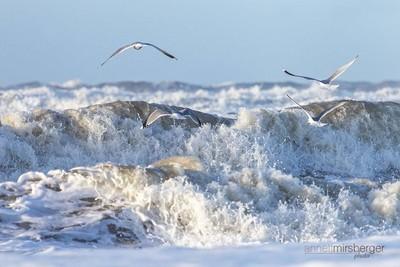 Wild northsea