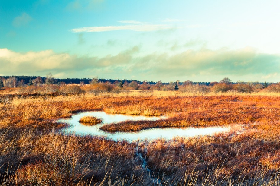 This Nature reservat called 'hohes Venn' is a very beautiful piece of the Natur...