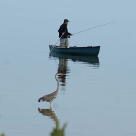 Early morning and captured this man fishing and the Great blue heron keeping up with him