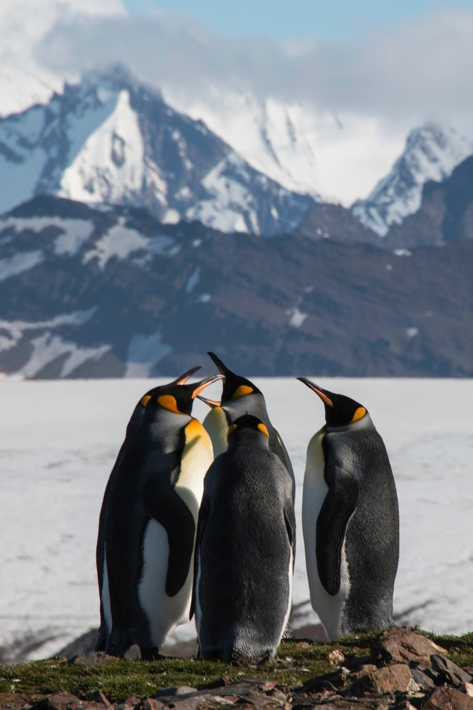 Huddle by bshaw - Around the World Photo Contest