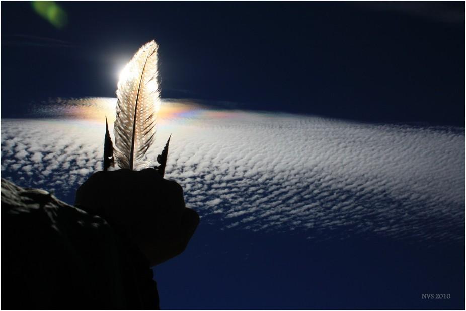 Pretty wings