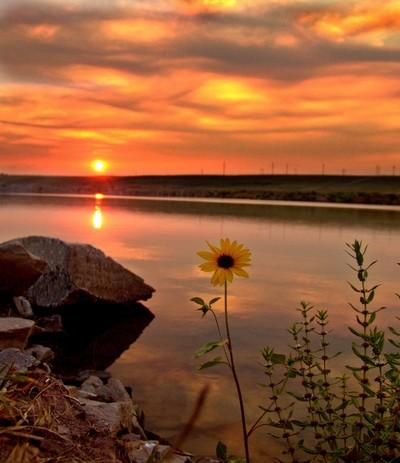 Daisy n River Sunset 1