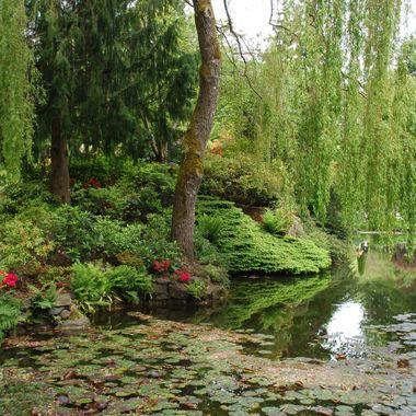 Lillypads of Buchart Gardens in Victoria, BC