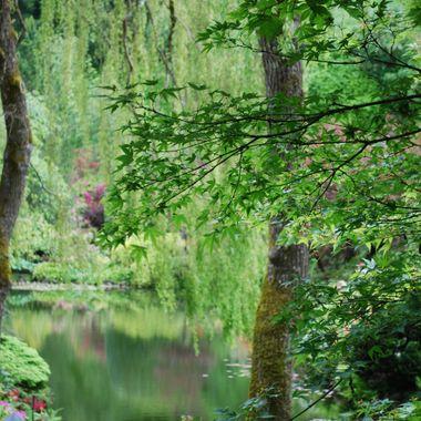 Magical gardens at Buchart