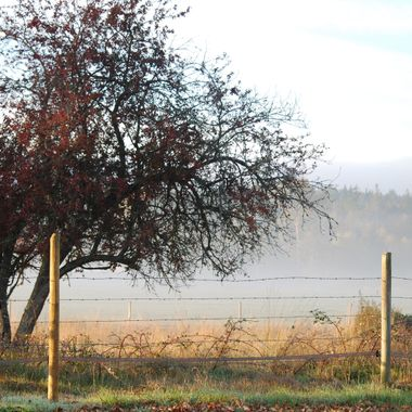 Fog on the Farm - Stanford Avenue in Parksville, BC 14 Oct 2014