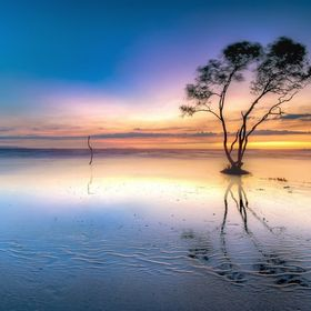 A lonely tree in sunrise at Tan Thanh beach, Go Cong, Viet Nam. A magical moment