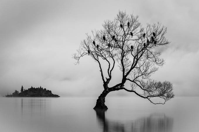 B& W  Birds of Lake Wanaka  by michellemckoy - Silhouettes Of Trees Photo Contest