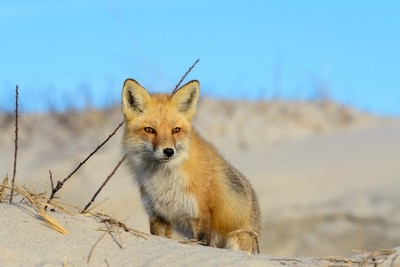 Those Foxy Brown Eyes
