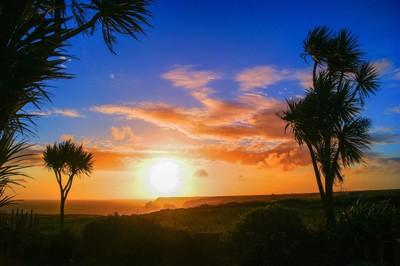 Sunset Among The Palms