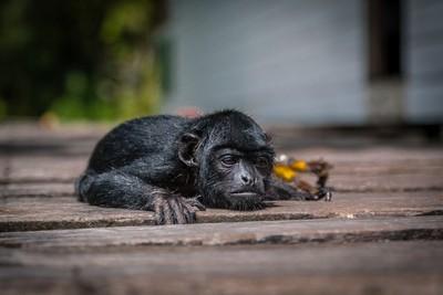 Chilling Monkey