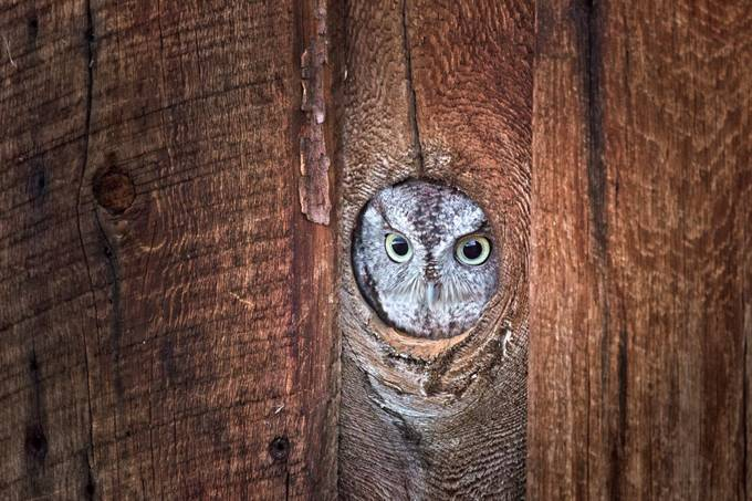 Lookout by chelseatischler - Can You See Me Photo Contest