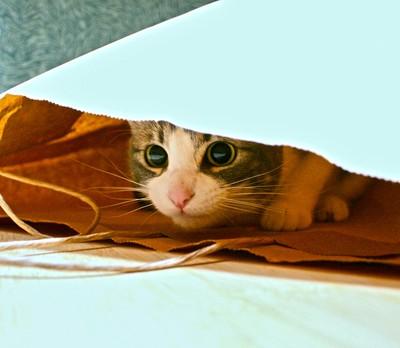 Nimi in the bag