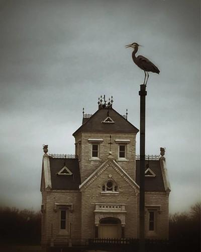 Gothic Heron