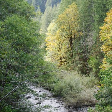Shades of Yellow & Green trees along the creek bed - Vancouver Island 2015 Oct