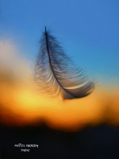 A Heart is as Delicate As a Feather...