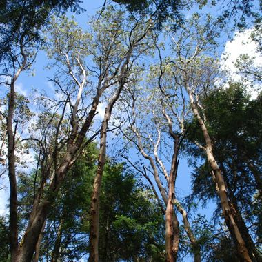 Trees reach for the blue & white dotted sky - May 2014